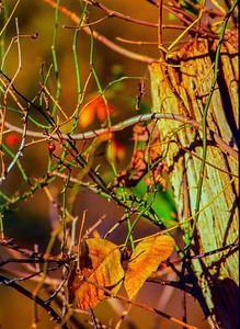 leaf-post