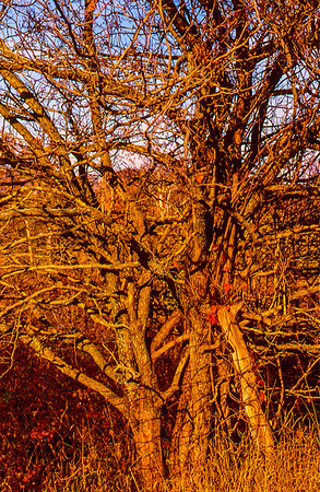 fall-hedge