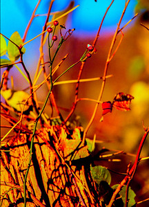 fall-vine-post