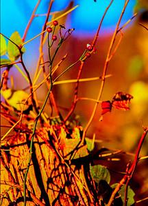 fall-vine-post
