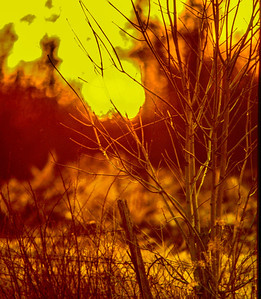fence-row-sunset
