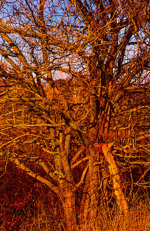fall-hedge-2
