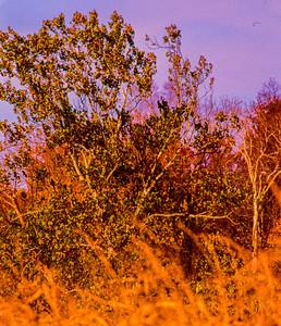 dry-grass-&-tree