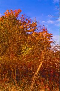 fall-fence-row