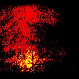 brush-sunset