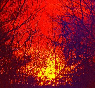 sunset-bushes