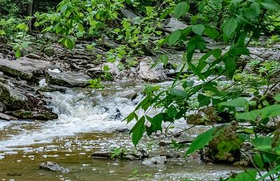 May 2019 McCormics Creek-14