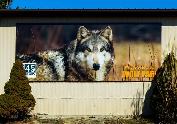 Feb 2018 Wolf Park-6