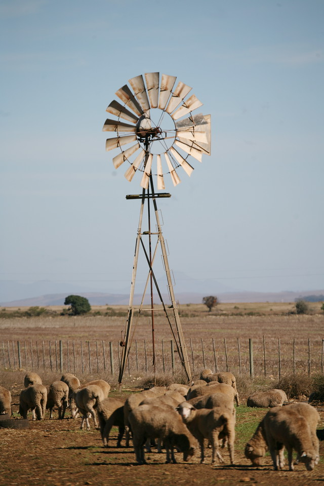 Windpump and sheep