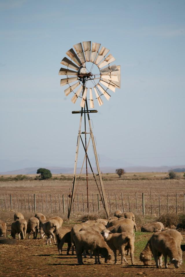 Windpump and sheep