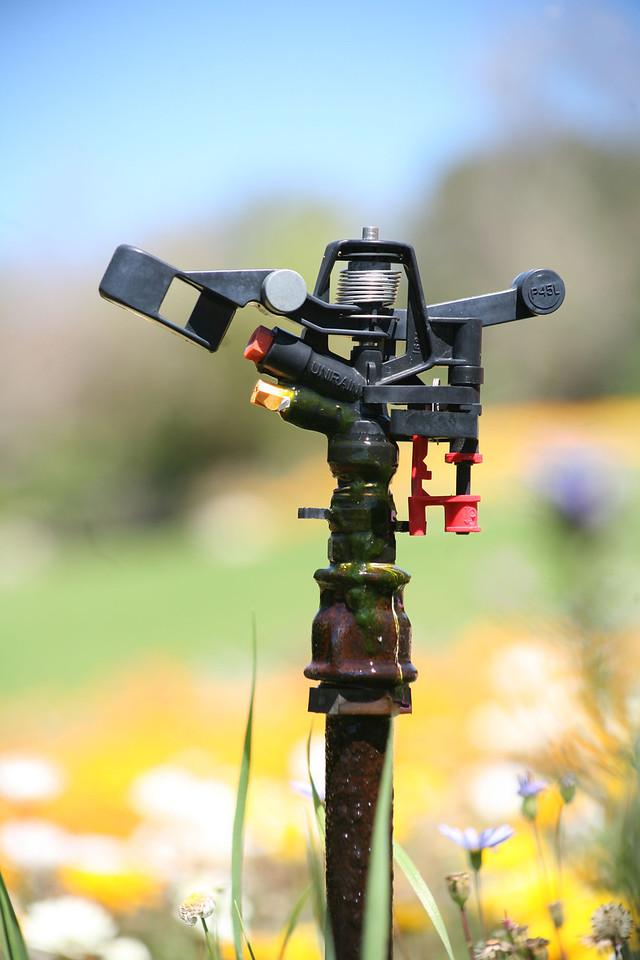 Sprinkler head for irrigation