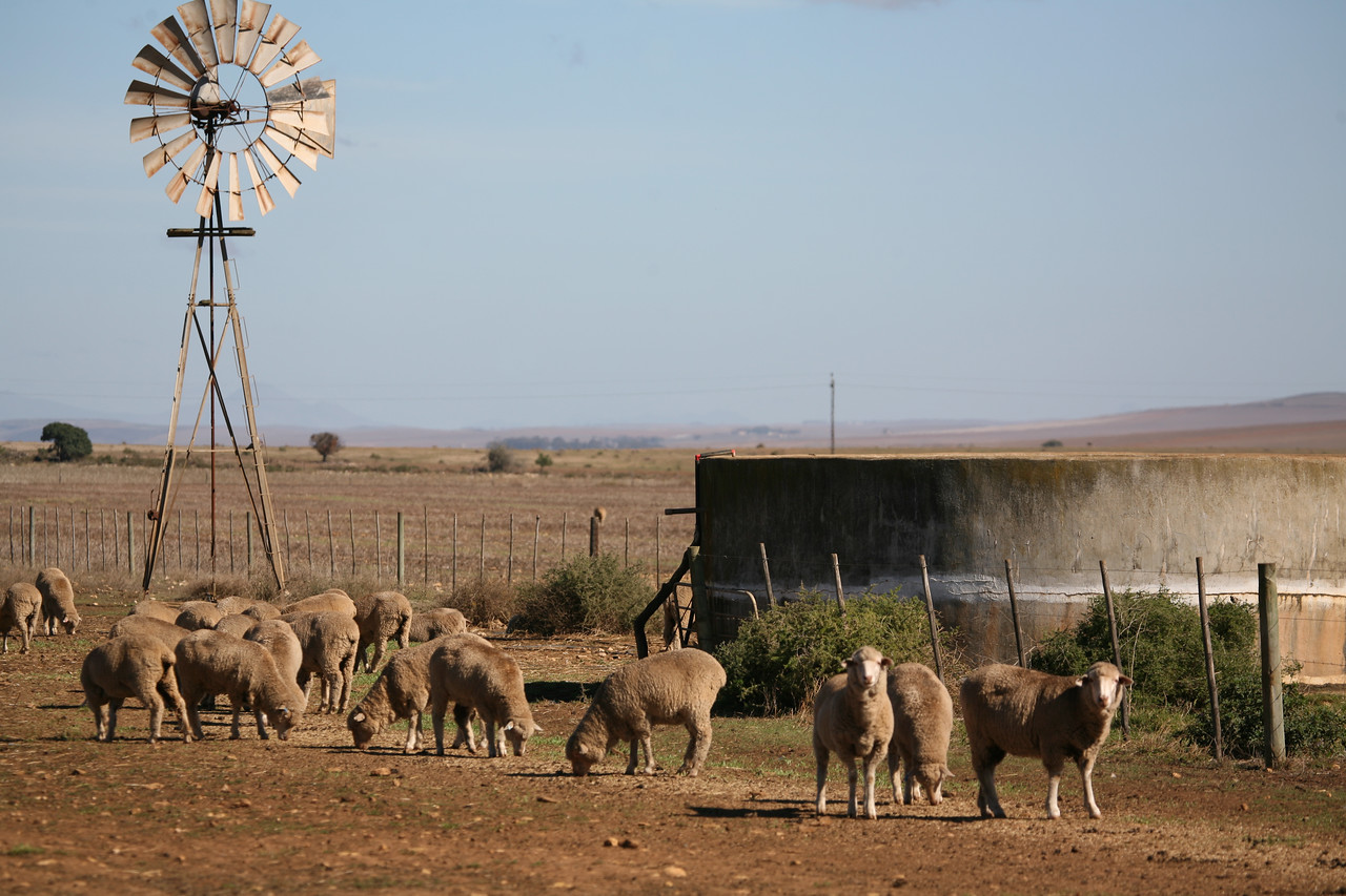 Windpump with reservoir and sheep