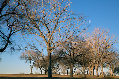Moon trees C0480