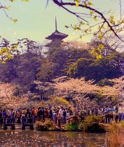 Sankeien Gardens 1972-74