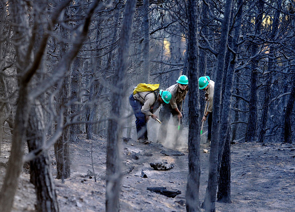 """Platte Canyon firefighters Mike Reese, left, Neil Thoreson, and Seth Humphreys work to put out a smoldering log on Saturday, Sept. 11, just west of Gold Hill.<br /> For more photos of the area go to  <a href=""""http://www.dailycamera.com"""">http://www.dailycamera.com</a><br /> Jeremy Papasso/ Camera"""