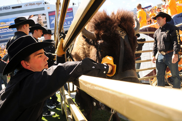 University of Colorado junior Colin Hinman pets Ralphie before the start of the game against Colorado State University on Saturday, Sept. 4, at Invesco Field in Denver.<br /> Photo by JEREMY PAPASSO