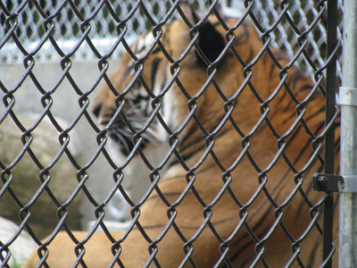 July 22, 2012 (Quinn's Zoo Visit With African Wild Dogs)