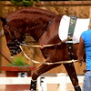 Katie and Instruido - 9-8-2012 025