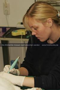 Zahnstein bei einer Katze entfernen