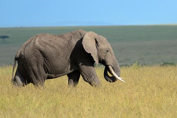Kenya 2013