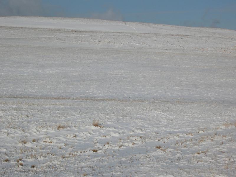 43 Snow horizon