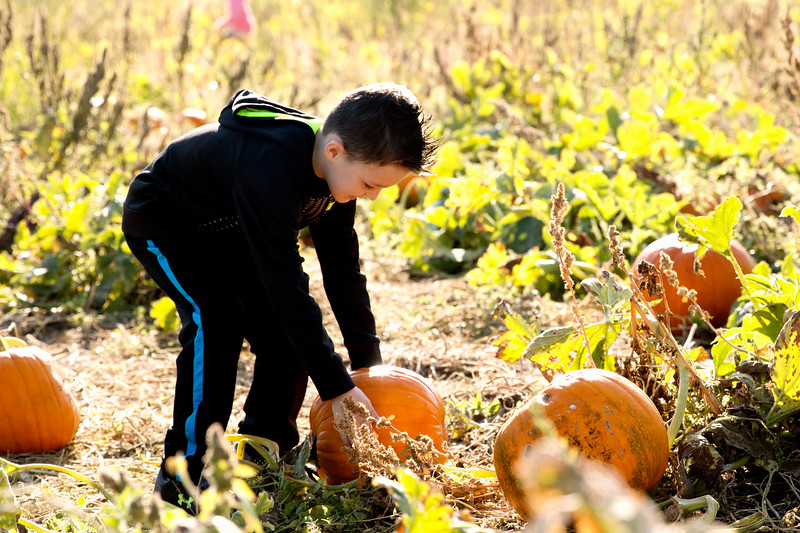 Matthew Gaston | The Sheridan Press<br>Meadow Lark Elementary kindergartner Griffon Cherry (5), searches for the perfect pumpkin for a class project at the Koltiska's Pumpkin Patch on Tuesday, Sept. 18, 2018.