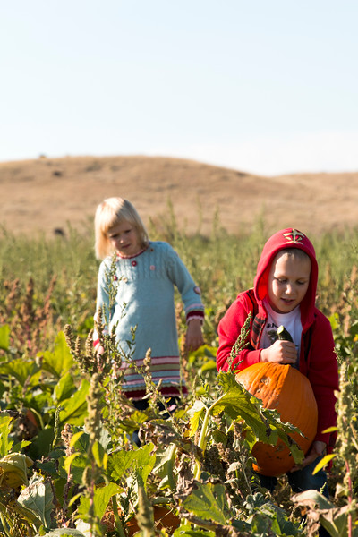 Matthew Gaston | The Sheridan Press<br>Katie VanHouten (5), left, looks on as her classmate from Meadowlark Elementary, Rayden Lawler (5), right, wrangles his pumpkin from the patch on Tuesday, Sept. 18, 2018.