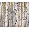 Aspen Grove - Lee Vining