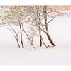 Aspen Winter zen