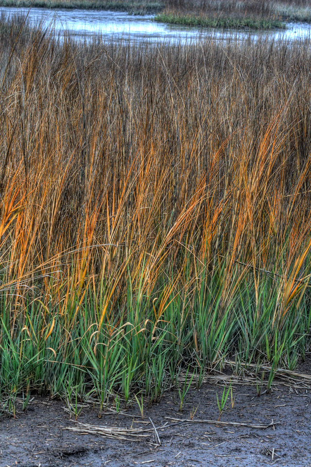 Orange reeds?