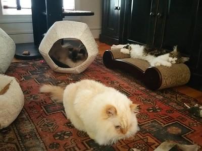 Toshi, Zena, Brewster