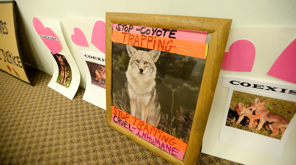 . Wildlife preservation activists place their signs in the city council chambers as they protest the City\'s plan to trap and euthanize coyotes on Tuesday February 14, 2017. (Photo by Keith Durflinger/San Gabriel Valley Tribune/SCNG)
