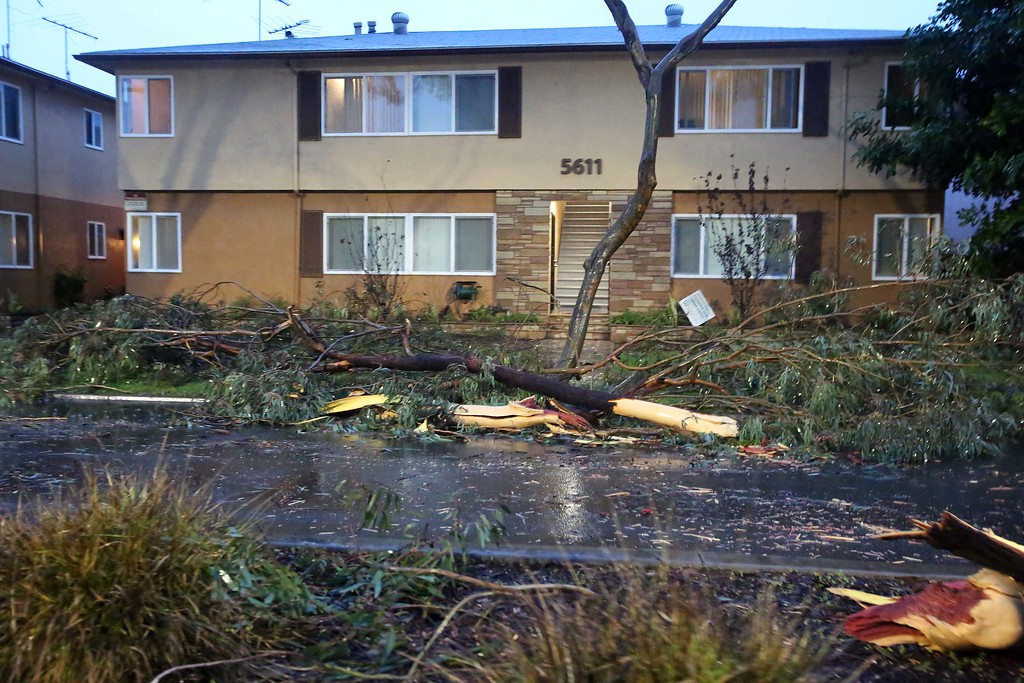 . February 17, 2017  Photo by Tracey Roman/for the Press-Telegram Tree limbs are down on 23rd Street in East Long Beach after a big cell moved through the area Friday.