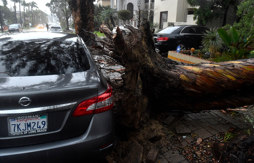 . A tree fell onto two homes on Roycroft Avenue in Long Beach, CA on Friday, February 17, 2017. The damage appeared to be minor. (Photo by Scott Varley, Press-Telegram/SCNG)