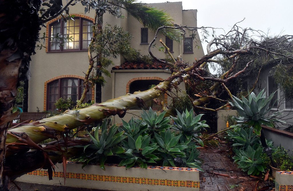 . Atree that fell onto two homes on Roycroft Avenue in Long Beach, CA on Friday, February 17, 2017. The damage appeared to be minor. (Photo by Scott Varley, Press-Telegram/SCNG)