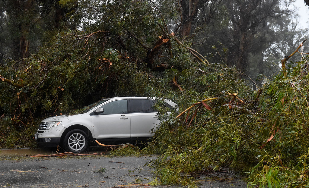 . Three cars parked on Parke Avenue were damaged by falling trees in Long Beach, CA on Friday, February 17, 2017. Multiple trees fell in Recreation Park during the storm Friday. (Photo by Scott Varley, Press-Telegram/SCNG)