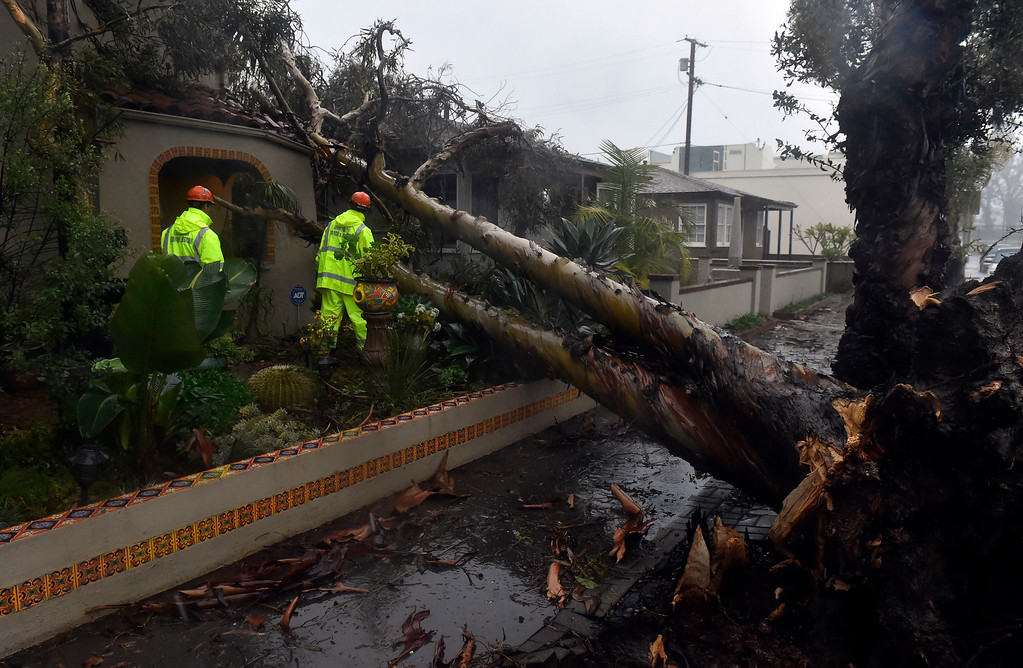 . Search and rescue members inspect a tree that fell onto two homes on Roycroft Avenue in Long Beach, CA on Friday, February 17, 2017. The damage appeared to be minor. (Photo by Scott Varley, Press-Telegram/SCNG)
