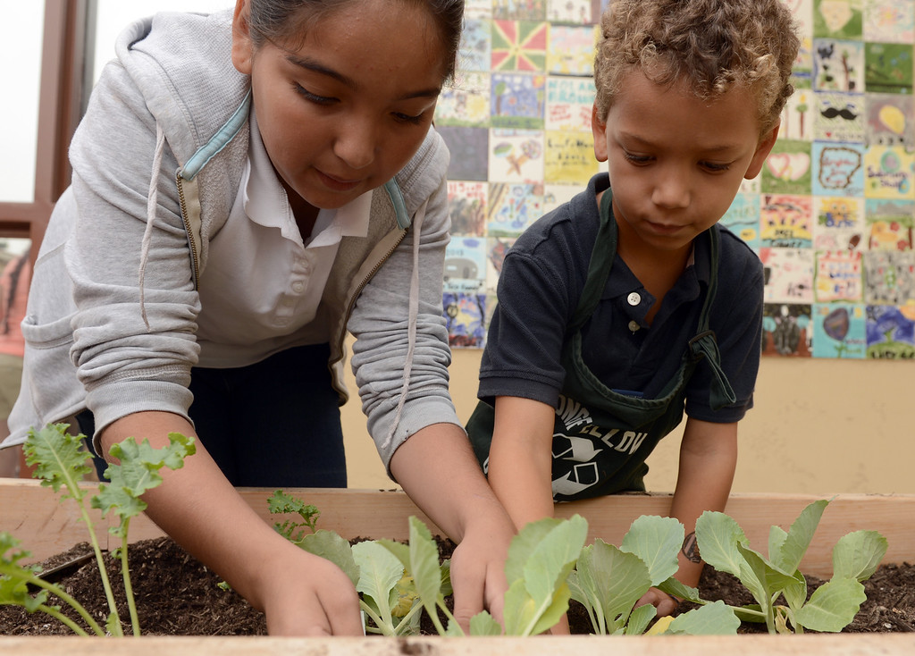 . A group touring Longfellow Elementary School makes its way through one of the schools gardens as U.S. Dept. of Education and state officials visit the Long Beach school because they\'ve won green ribbon awards for their environmental sustainability efforts in Long Beach CA. Tuesday September 18, 2013.(Photo by Thomas R. Cordova/ Press-Telegram)