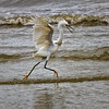 """HELP!!!""<br /> Snowy Egret<br /> Fish Haul Creek Park<br /> Hilton Head Island, SC"