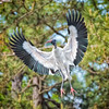 Wood Stork Landing<br /> Beaufort County, SC