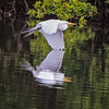 Great Egret Touching Reflection<br /> Beaufort County, SC
