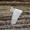 """Catch of the Day""<br /> Great Egret<br /> Fish Haul Creek Park<br /> Hilton Head Island, SC"