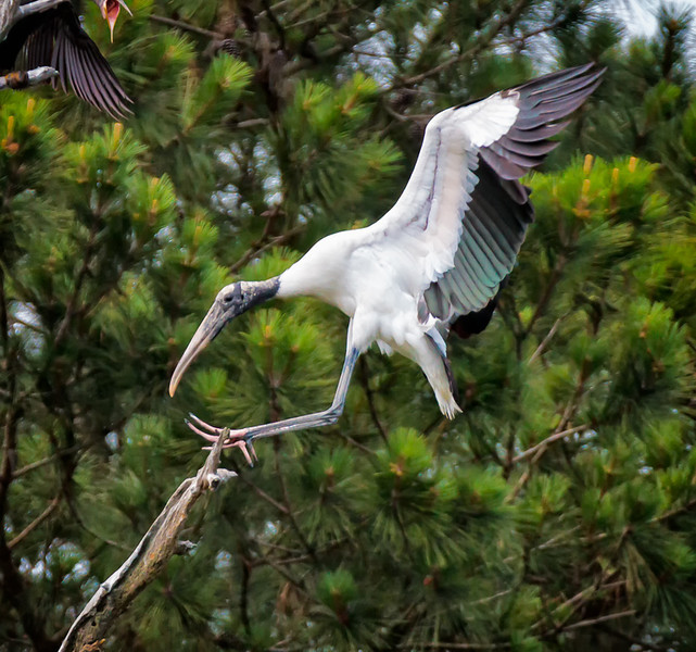 Wood Stork Landing<br /> Beaufort County, SC