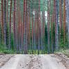 2021 FIA World Rally Championship / Round 07 / Rally Estonia / 15-18 July, 2021 // Worldwide Copyright: McKlein