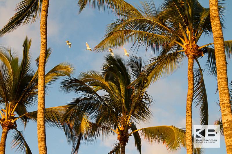 Maui Love-295
