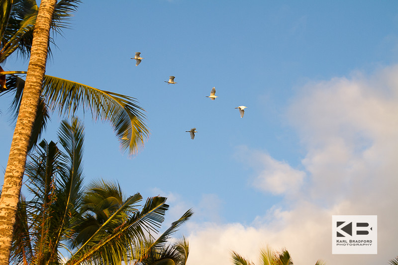 Maui Love-296