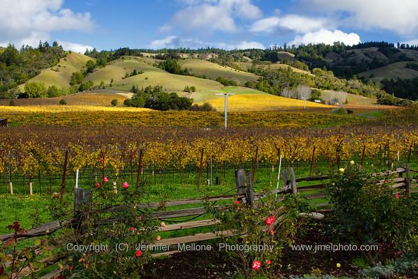 Vineyard in Alexander Valley