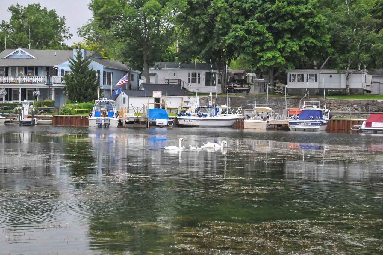 Weedy Grindstone City Harbor - June 2009