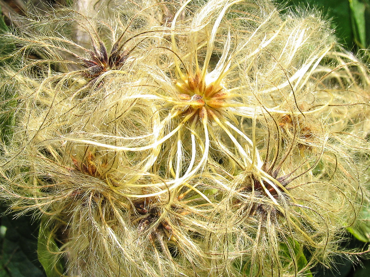 Close up of weeds!  September 2007