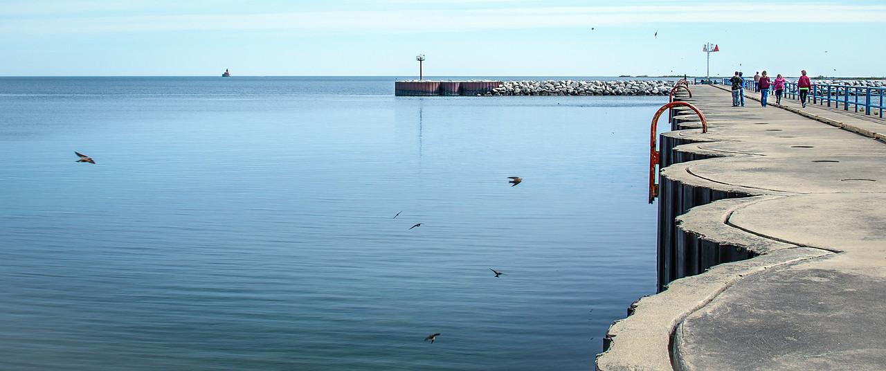 Sandpipers feeding on fish flies off of Port Austin Breakwall - May 2013